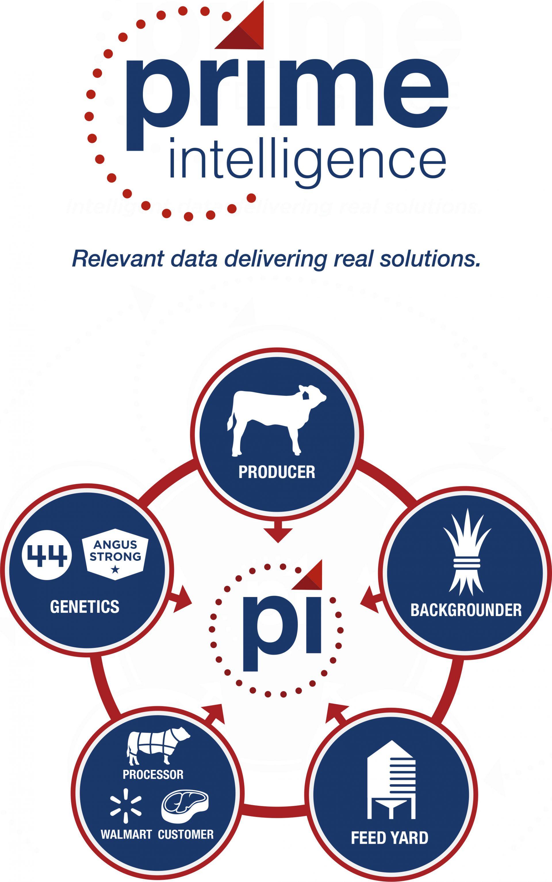 Prime Intelligence - Intelligent data delivering real solutions.