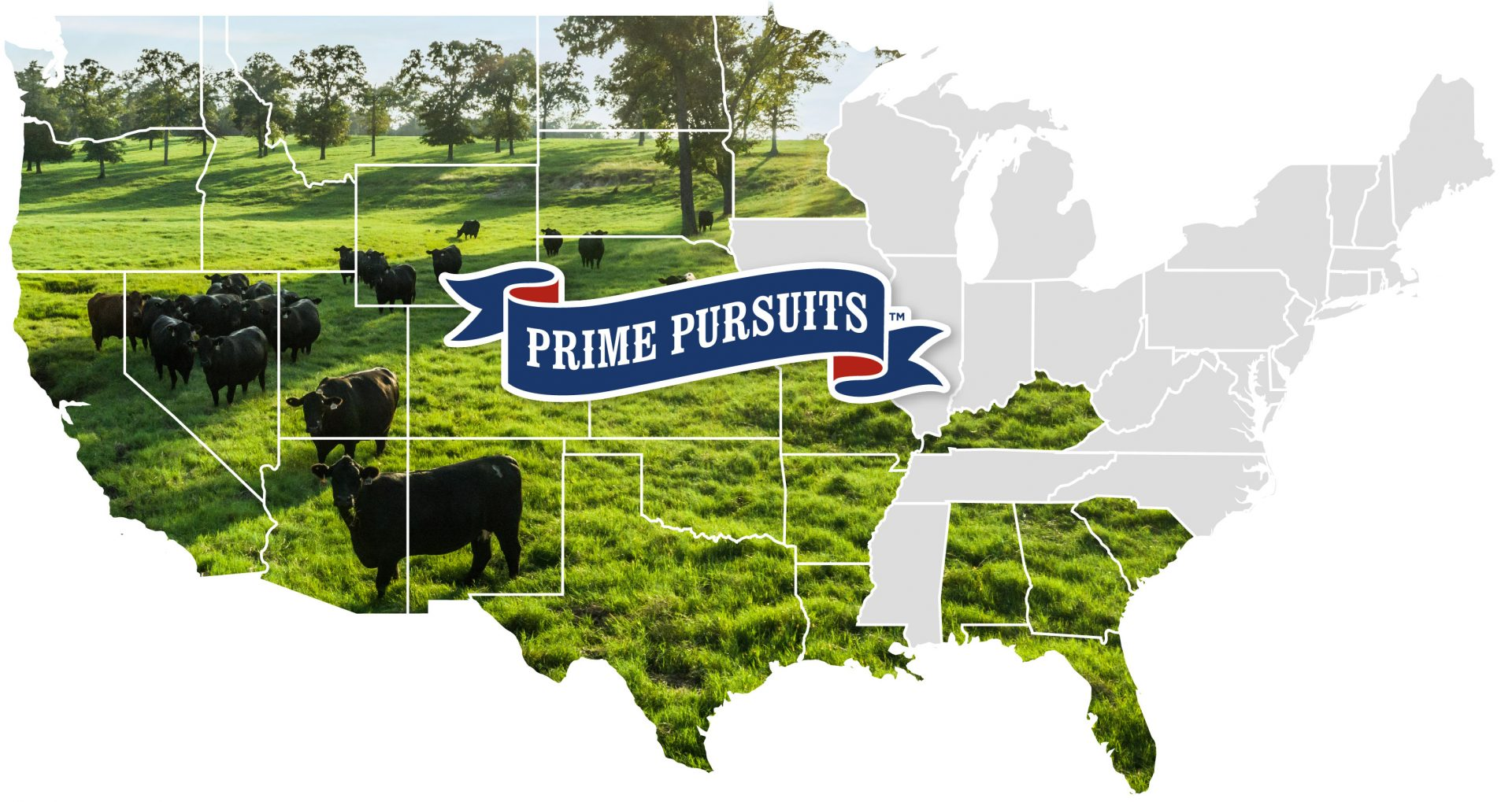 Today, more than 800 Angus producers, large and small, are part of the Prime Pursuits family.